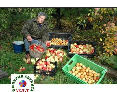 Посев, сбор, покупка урожая с дачного участка