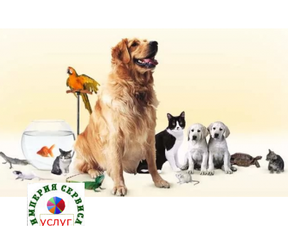 Доставка корма для животных